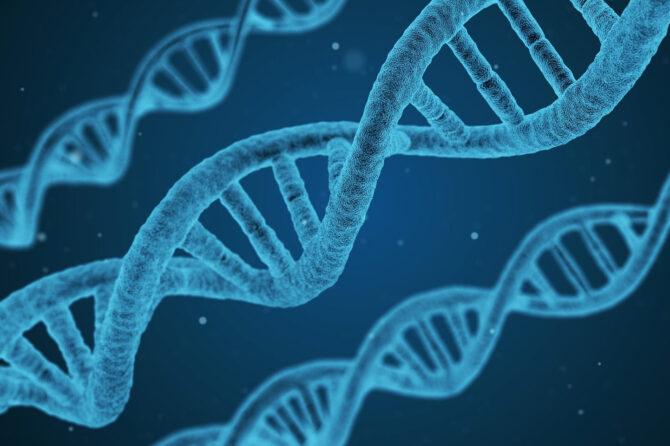 Come è organizzato il DNA?